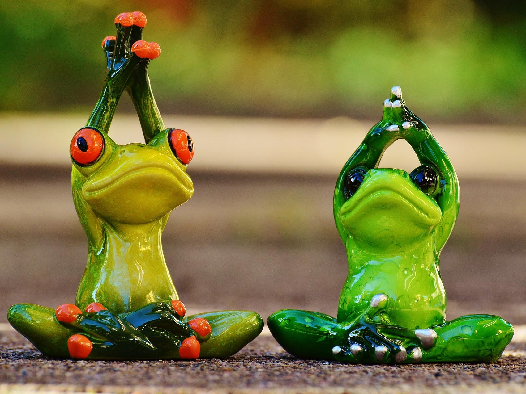 frogs-1030283_1920